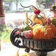 R_blooms_hot_skwash_velvet_pumpkins_img_6076