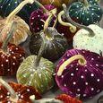 Hot Skwash velvet pumpkins LO review